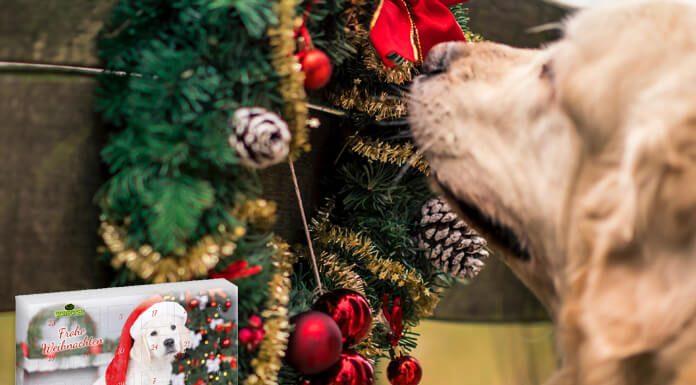 Adventskalender voor honden
